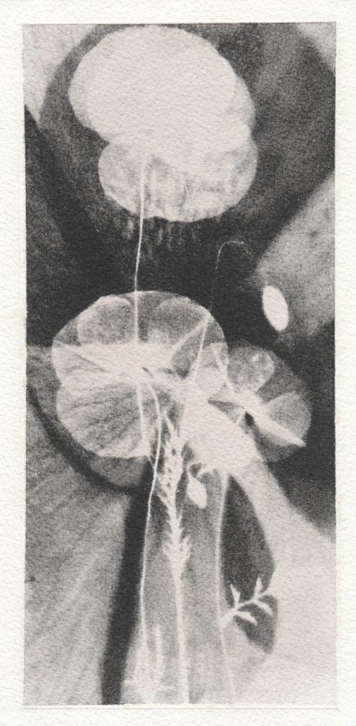 Poppy 2 (étude)